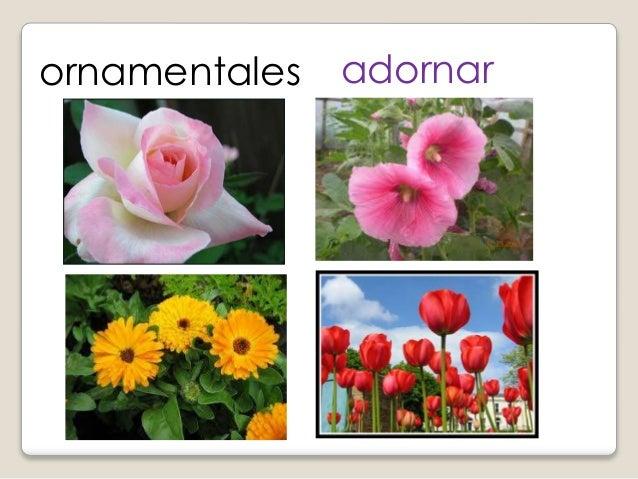 Clasificaci n de las plantas for 5 nombres de plantas ornamentales