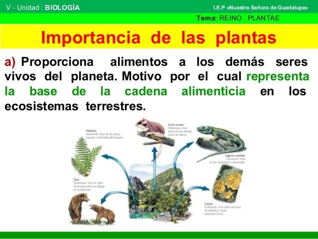 clasificaci n de las plantas 2