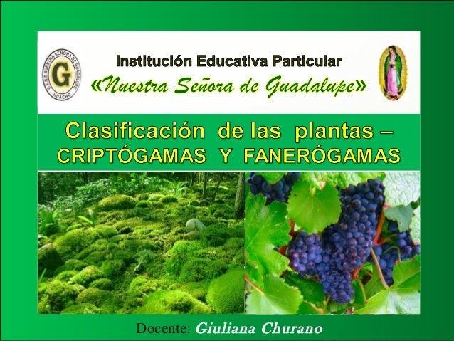 Clasificaci n de las plantas 3 for Clasificacion de las plantas ornamentales