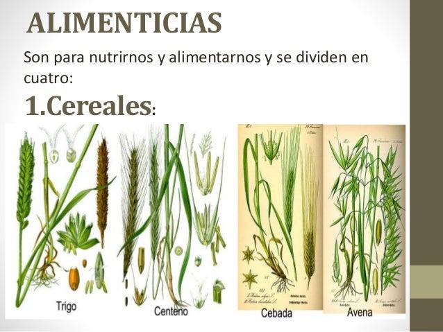 Clasificaci n de las plantas por su utilidad for Clasificacion de las plantas ornamentales
