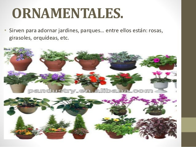 Clasificaci n de las plantas por su utilidad for Que significa plantas ornamentales