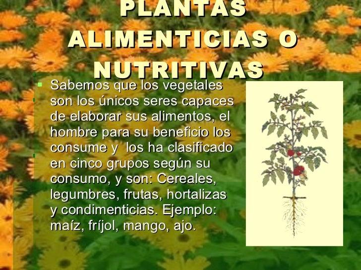 Clasificaci n de las plantas por su utilidad3 e for Plantas hortalizas ejemplos