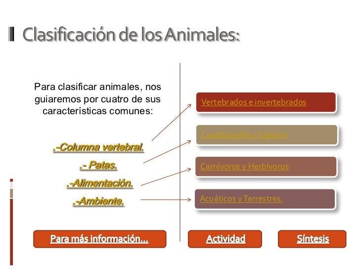 Clasificación de los Animales: Para clasificar animales, nos guiaremos por cuatro de sus     Vertebrados e invertebrados  ...
