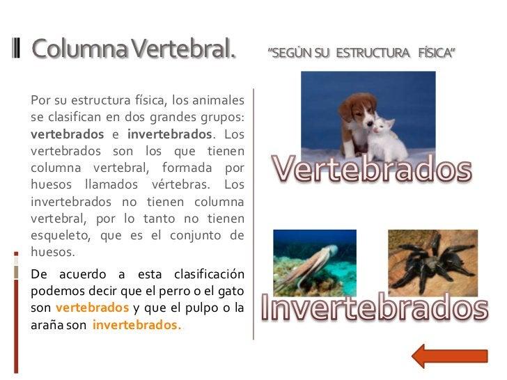 "Columna Vertebral.                       ""SEGÚN SU ESTRUCTURA FÍSICA""Por su estructura física, los animalesse clasifican e..."