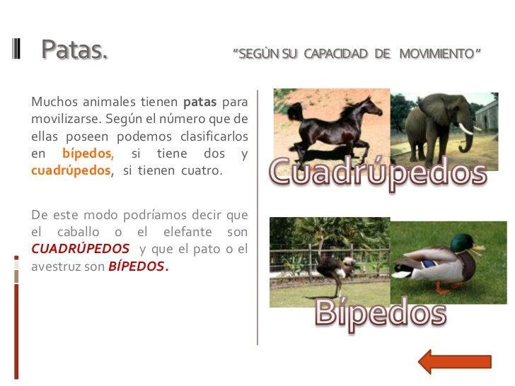 """Patas.                         """"SEGÚN SU CAPACIDAD DE MOVIMIENTO """"Muchos animales tienen patas paramovilizarse. Según el n..."""