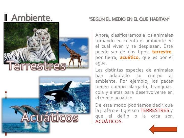"""Ambiente.   """"SEGÚN EL MEDIO EN EL QUE HABITAN""""              Ahora, clasificaremos a los animales              tomando en c..."""