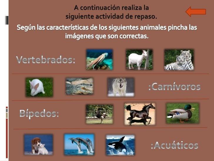 Para mayor información …Video explicativo de laclasificación de losanimales.                          Página web.