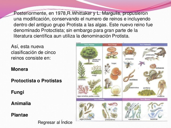 Caracteristicas del reino protista yahoo dating. what does 3rd base mean in dating.