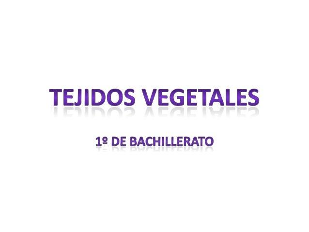 Clasificación de tejidos vegetales    Embrionarios                                                DefinitivosPrimarios   S...