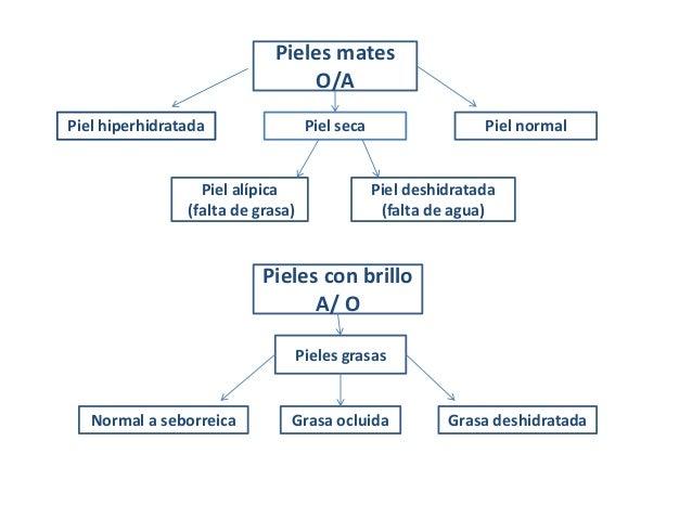 Clasificación piel  según emulsión epicutanea Slide 3