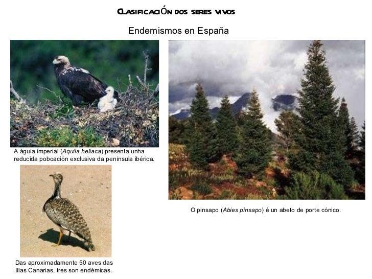Clasificación dos seres vivos Endemismos en España Das aproximadamente 50 aves das IIlas Canarias, tres son endémicas. A á...
