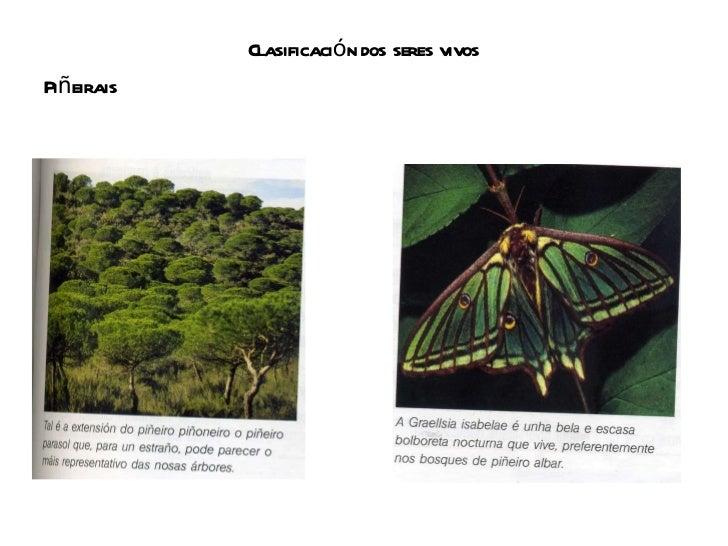 Clasificación dos seres vivos <ul><li>Piñeirais </li></ul>