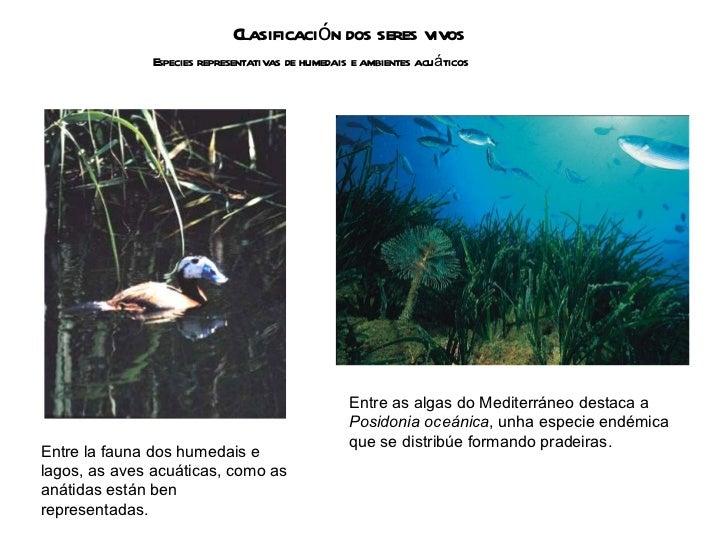 Clasificación dos seres vivos Especies representativas de humedais e ambientes acuáticos Entre la fauna dos humedais e lag...