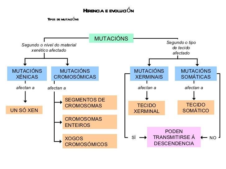 Herencia e evolución Tipos de mutacións MUTACIÓNS MUTACIÓNS XERMINAIS MUTACIÓNS SOMÁTICAS TECIDO XERMINAL TECIDO SOMÁTICO ...