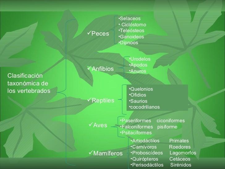 Gran Clasificación taxonómica de los vertebrados  Slide 2