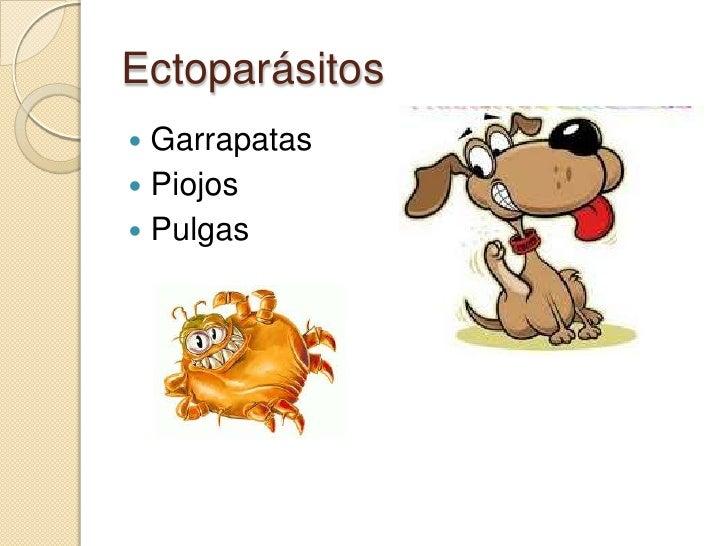 Clasificación y morfología de los parásitos