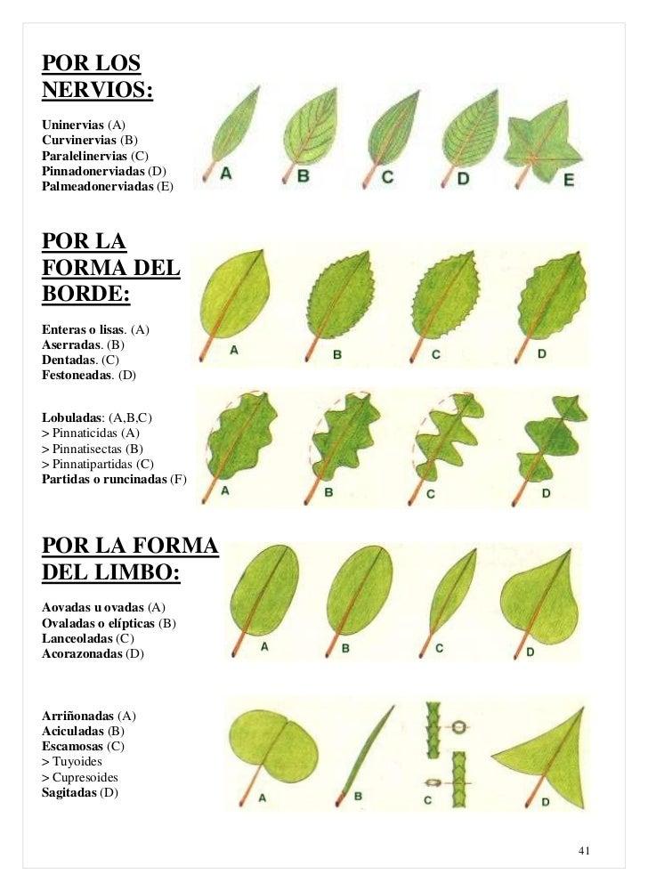 Clasificacion de las plantas for Clasificacion de las plantas ornamentales