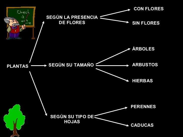 DE FLORES SEGÚN SU TAMAÑO SEGÚN SU TIPO DE HOJAS CON FLORES