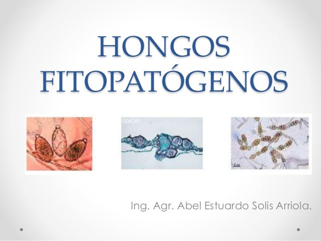 HONGOS FITOPATÓGENOS Ing. Agr. Abel Estuardo Solis Arriola.