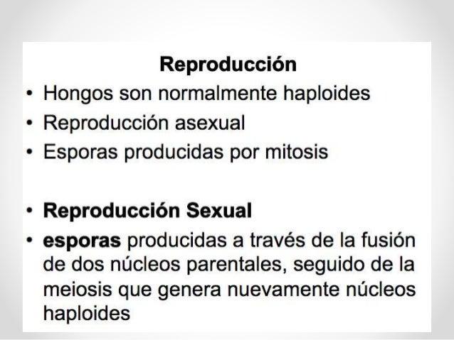 Plasmodiophoromycota reproduccion asexual en