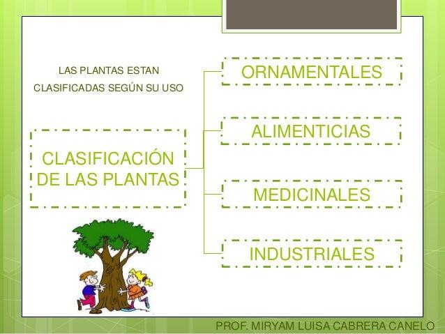 Clasificaci n de las plantas for Funcion de las plantas ornamentales