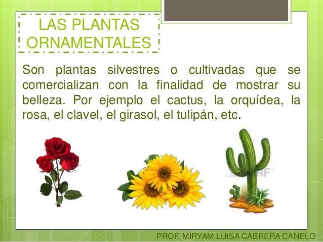 clasificaci n de las plantas On plantas ornamentales y para que sirven