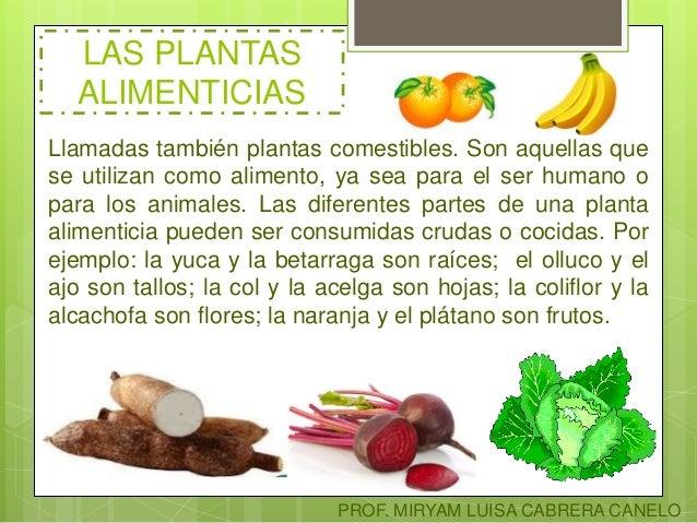 Clasificaci n de las plantas for Cuales son las plantas ornamentales y sus nombres