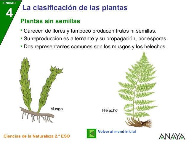 Clasificacion de las plantas 1 for Plantas sin semillas