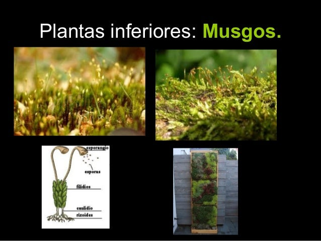 Clasificacion de las plantas 2 for Clasificacion de las plantas ornamentales