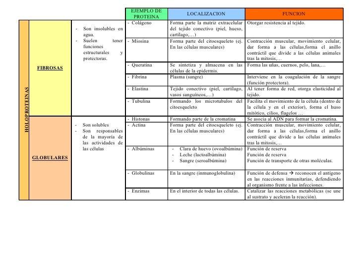 Clasificacion de las_proteinas[1][1]
