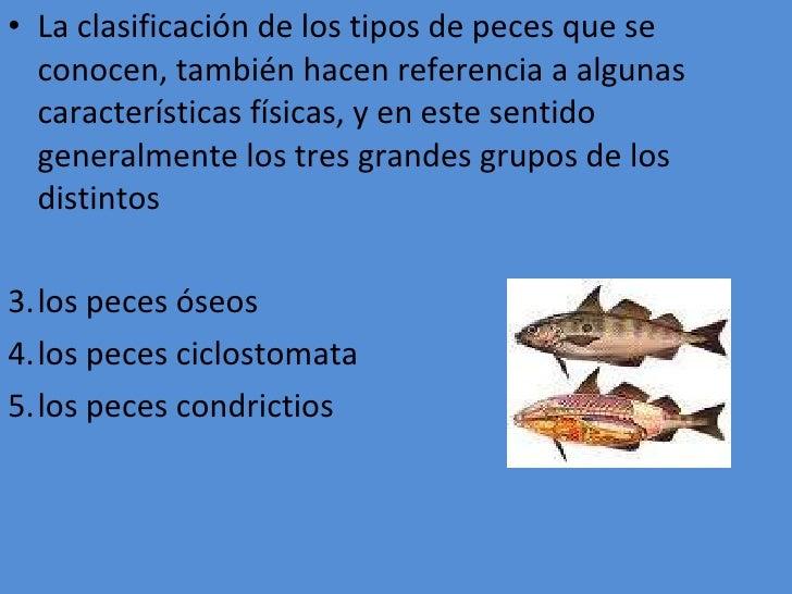 Clasificacion de los pescados for Tipos de jaulas para peces