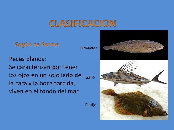 clasificacion de los pescados