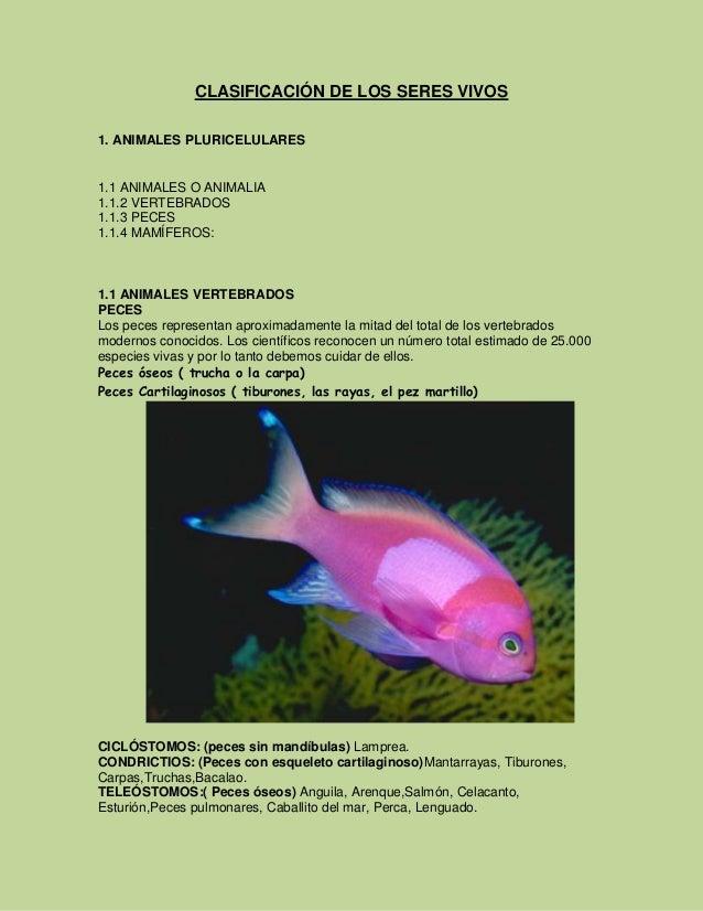 CLASIFICACIÓN DE LOS SERES VIVOS 1. ANIMALES PLURICELULARES  1.1 ANIMALES O ANIMALIA 1.1.2 VERTEBRADOS 1.1.3 PECES 1.1.4 M...