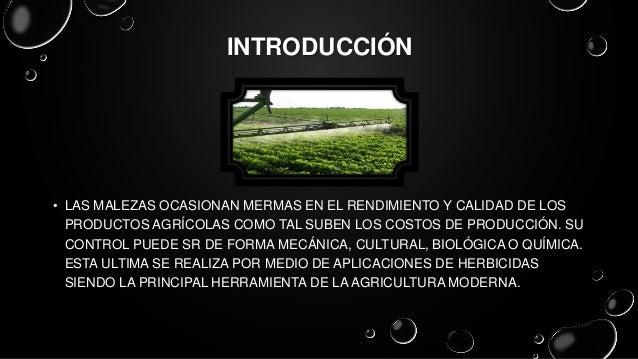 Clasificación de herbicidas Slide 3