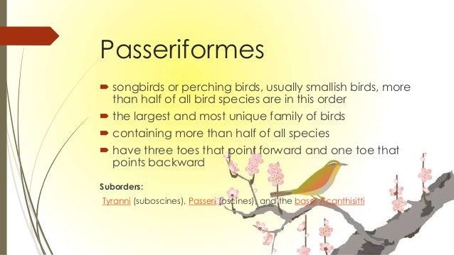 Class Aves List