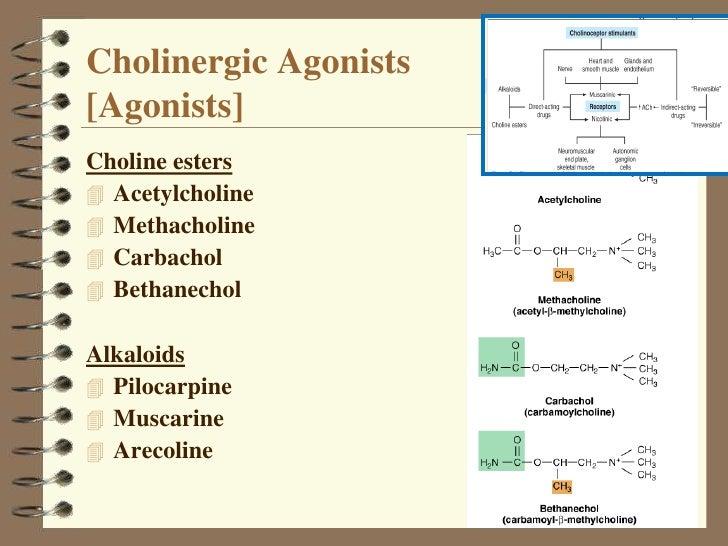 Cholinergic system Class I Slide 3