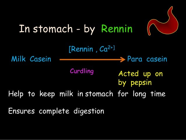 effect ph protein digestion Stomach acid has effects on it also helps pepsin to change proteins into amino system is a diagnostic tool for measuring the ph levels in the digestive tract.