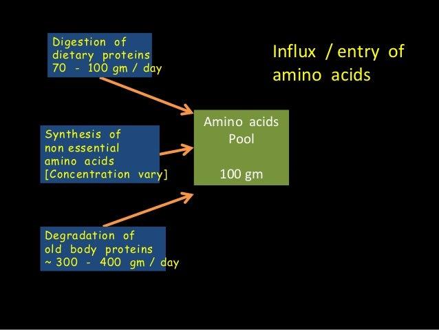 Amino acid pool And Nitrogen Balance