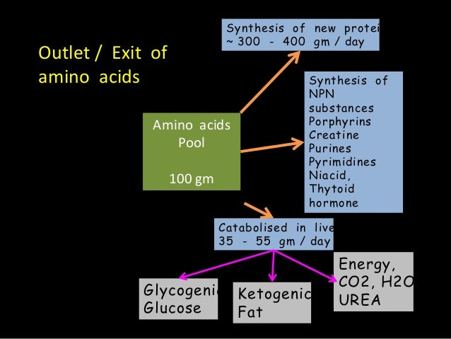Amino acid pool And Nitrogen Balance