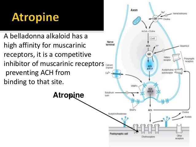 class anticholinergic drugs, Skeleton