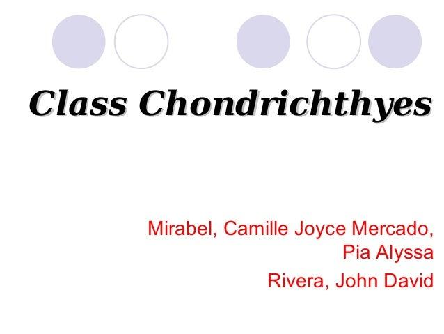 Class Chondrichthyes  Mirabel, Camille Joyce Mercado, Pia Alyssa Rivera, John David