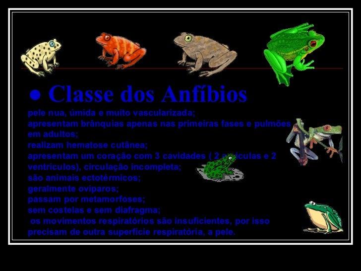 Classe Dos AnfíBios Slide 3