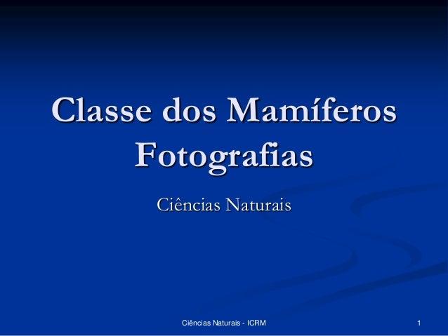 Classe dos Mamíferos Fotografias Ciências Naturais Ciências Naturais - ICRM 1