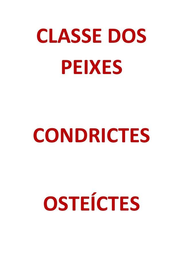 CLASSE DOS PEIXES CONDRICTES OSTEÍCTES