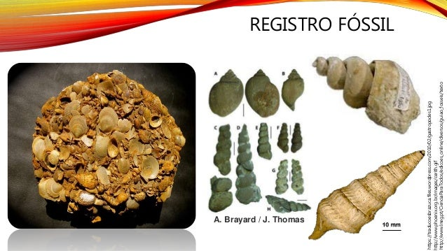 REGISTRO FÓSSIL http://www.lneg.pt/CienciaParaTodos/edicoes_online/diversos/guiao_fosseis/texto http://www.phoenix.org.br/...