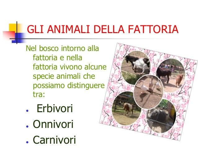 GLI ANIMALI DELLA FATTORIA Nel bosco intorno alla fattoria e nella fattoria vivono alcune specie animali che possiamo dist...