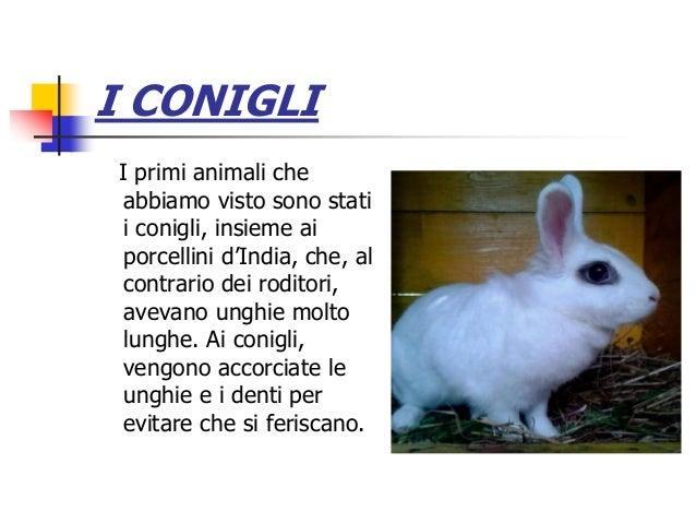 I CONIGLI I primi animali che abbiamo visto sono stati i conigli, insieme ai porcellini d'India, che, al contrario dei rod...