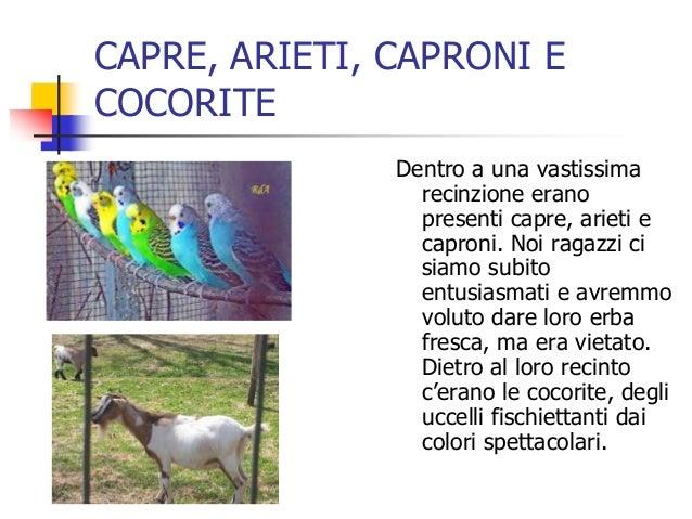CAPRE, ARIETI, CAPRONI E COCORITE Dentro a una vastissima recinzione erano presenti capre, arieti e caproni. Noi ragazzi c...