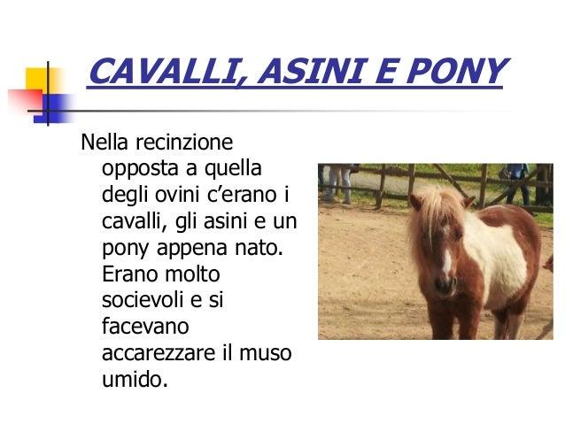 CAVALLI, ASINI E PONY Nella recinzione opposta a quella degli ovini c'erano i cavalli, gli asini e un pony appena nato. Er...