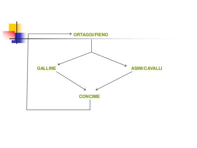 ORTAGGI/FIENO GALLINE ASINI/CAVALLI CONCIME